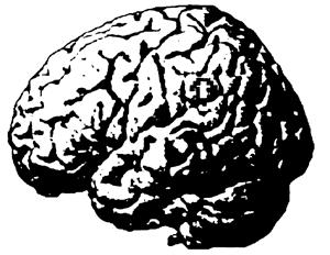 brain-sil.png